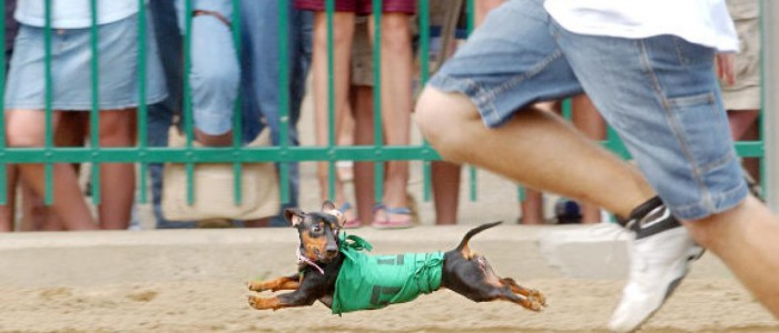 Wiener Dog Races at Ellis Park Henderson