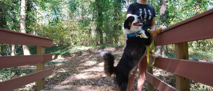 Scout the Shetland Sheepdog mix stands with his owner on a wooden bridge on the Canoe Creek Nature Trail.