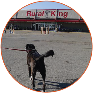 blog-dog-rural-king