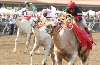 COADY-Photography-Camel Race-ELP-072515-003