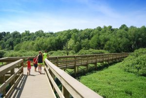 A family of four walk along a raised boardwalk while holding hands at Audubon Wetlands Boardwalk.