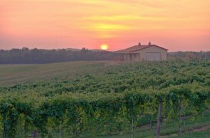 A pink and orange sunset sets behind the rolling hills of grape vines at Boucherie Winery.